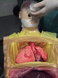 thoracic view
